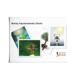 Large Botany Impressionistic Charts