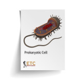 Prokaryotic Cell Nomenclature