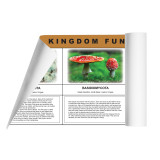 Fungi Kingdom Chart (ELC-4057)