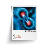 Cell Division - Mitosis (ELC-4011)
