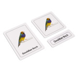 Birds 3 Part Cards (EC-0408A)