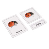 Insects 3 Part Cards (EC-0440A)