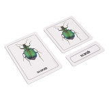 Invertebrates 3 Part Cards (EC-0450A)