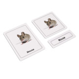 Mammals 3 Part Cards (EC-0424A)