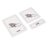 Parts of a Bird 3 Part Cards (EC-0456)