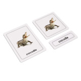 Reptiles 3 Part Cards (EC-0417A)