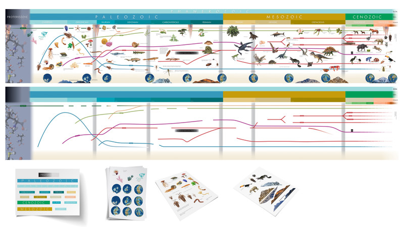 Working model of Timeline of life and evolution