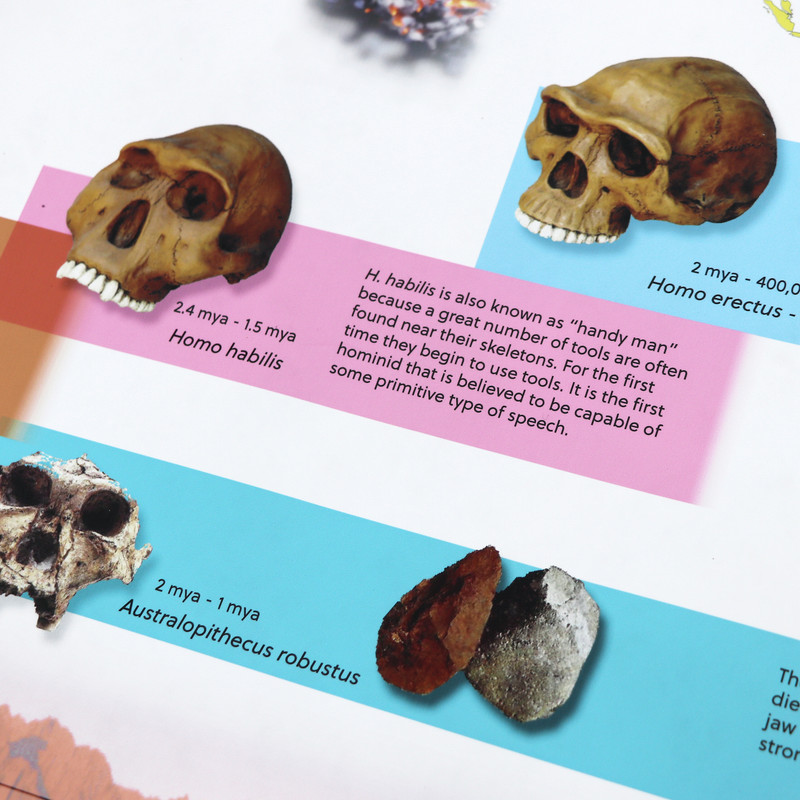 Timeline of Early Human development and evolution
