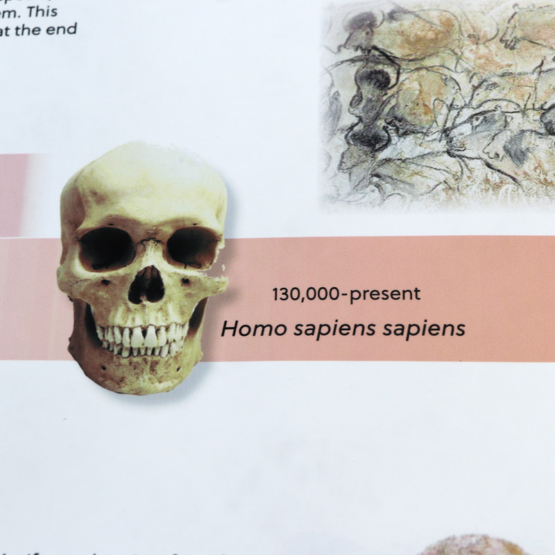 Timeline of Early Humans