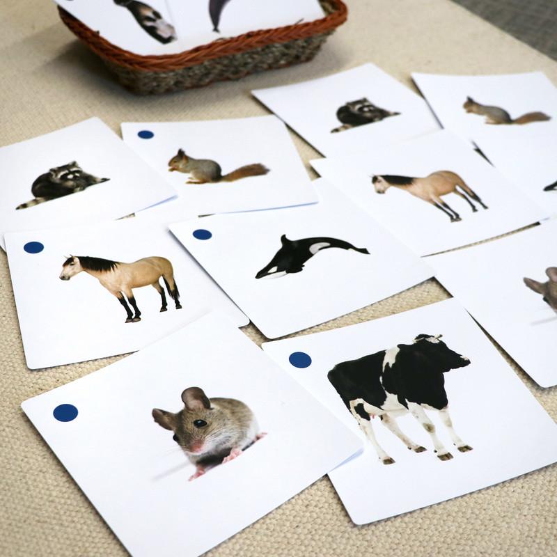 Mammals Matching Cards