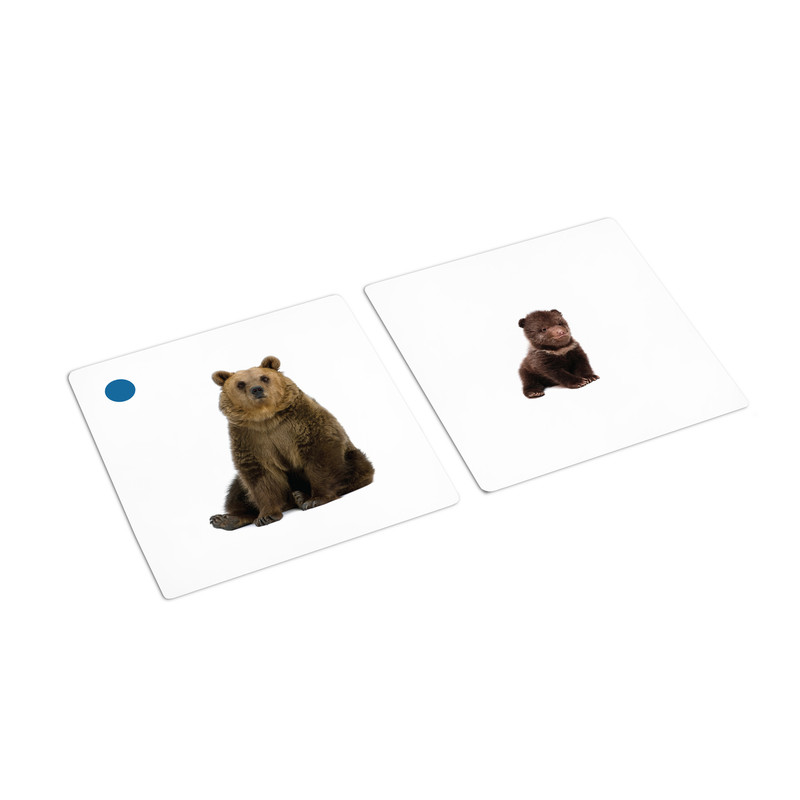 Wild Animals and Their Young Matching Cards (IT-0014)