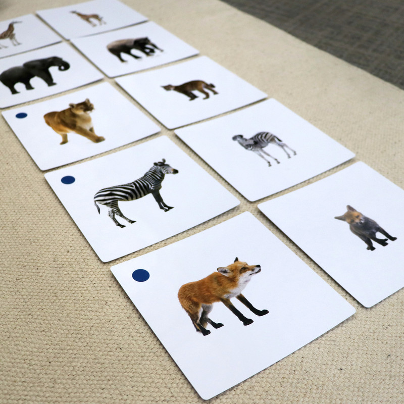 Wild Animals and Their Young Matching Cards