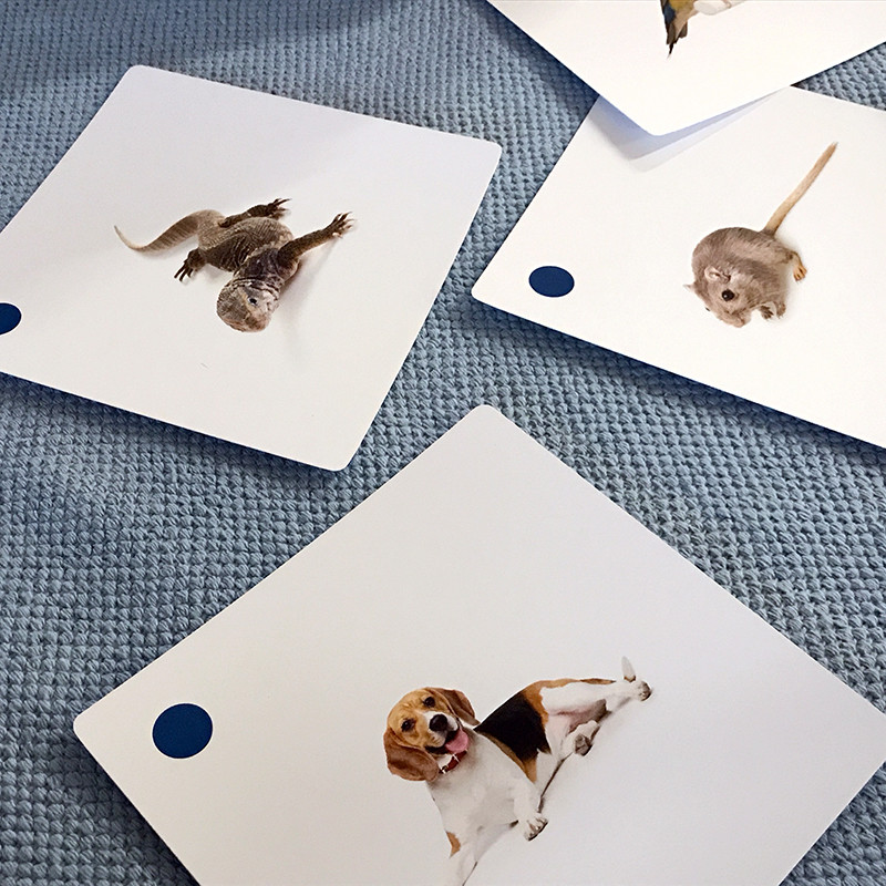 Pets Matching Cards (IT-0015)