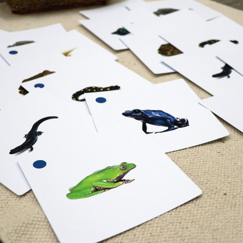 Amphibian Matching Cards (IT-0016)