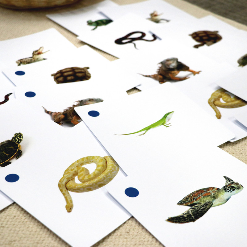 Reptile Matching Cards (IT-0018)