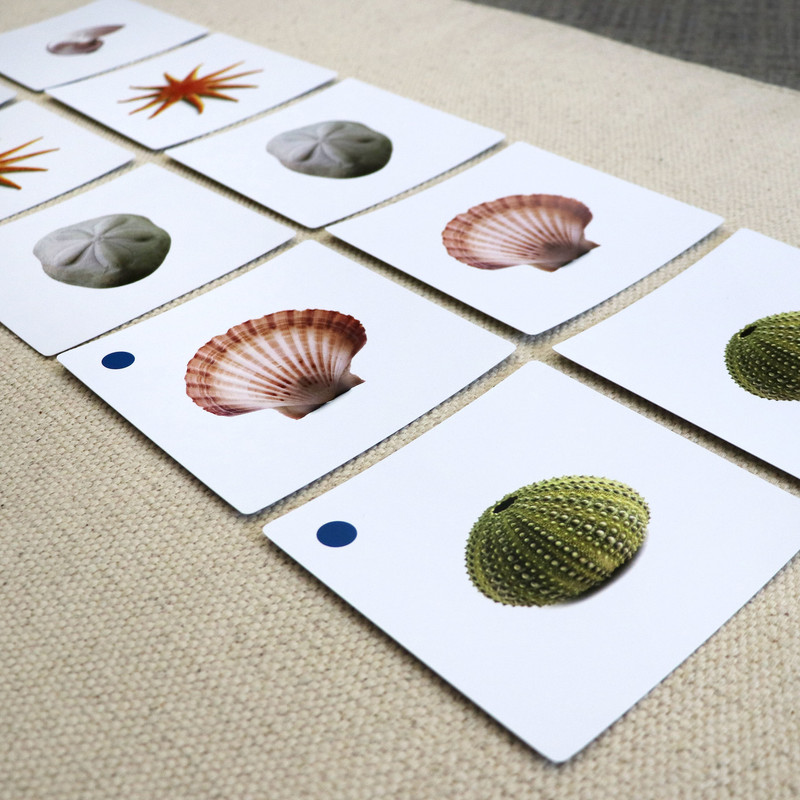 Shell Matching Cards