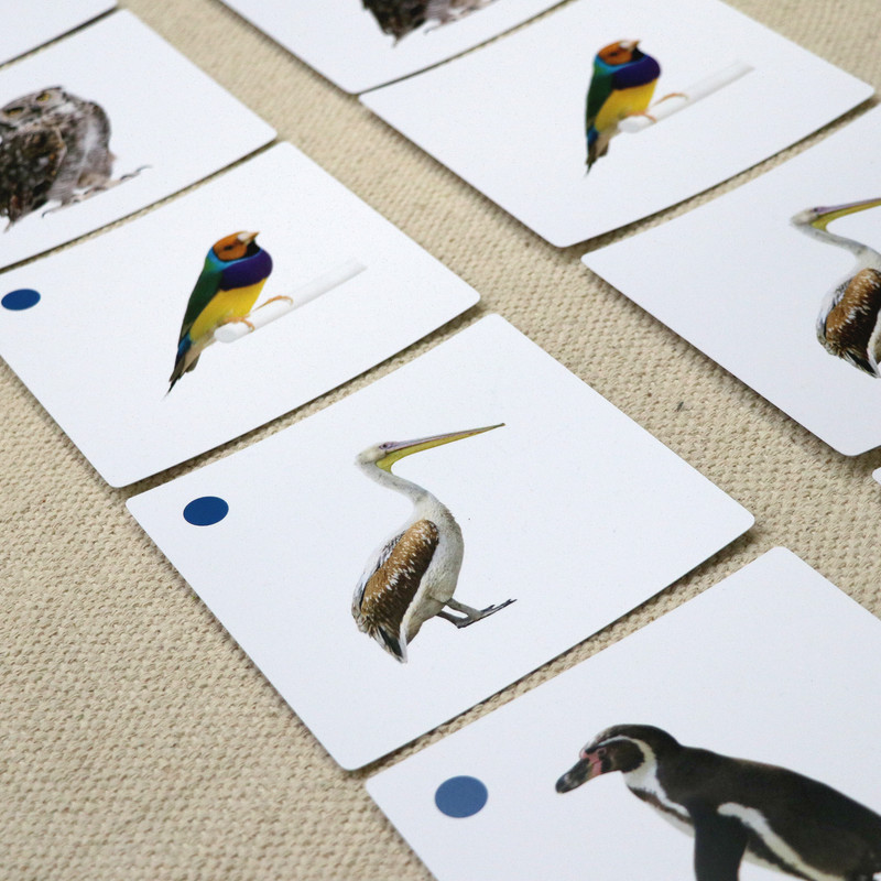 Birds Matching Cards (IT-0020)