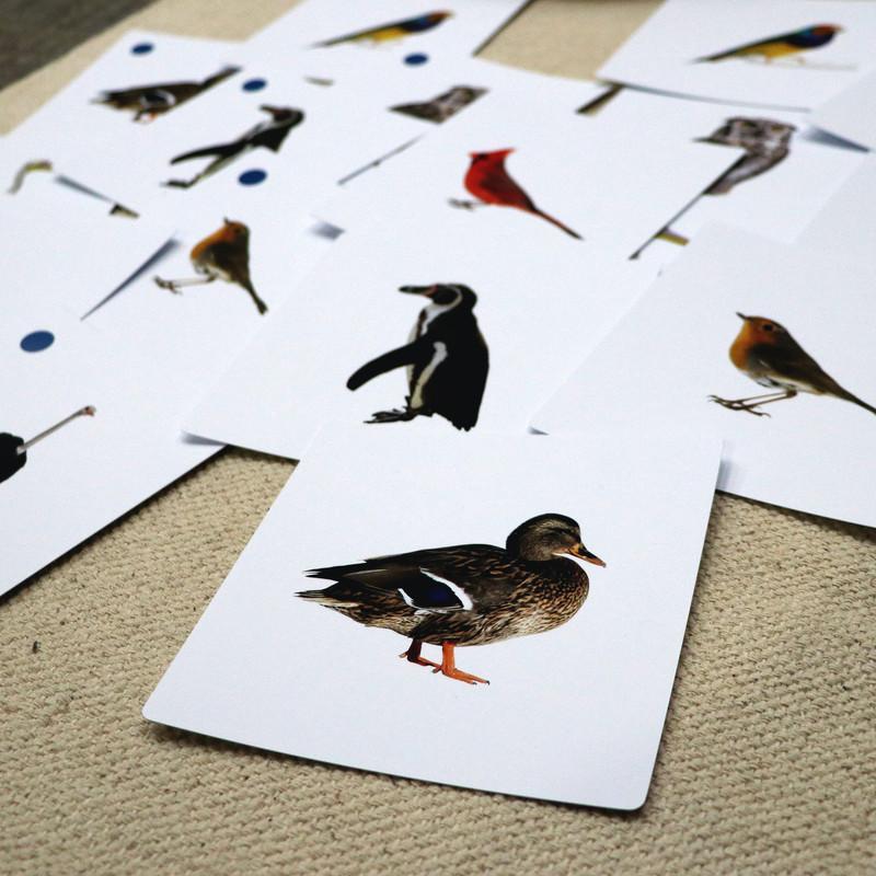 Birds Matching Cards (IT-0020)