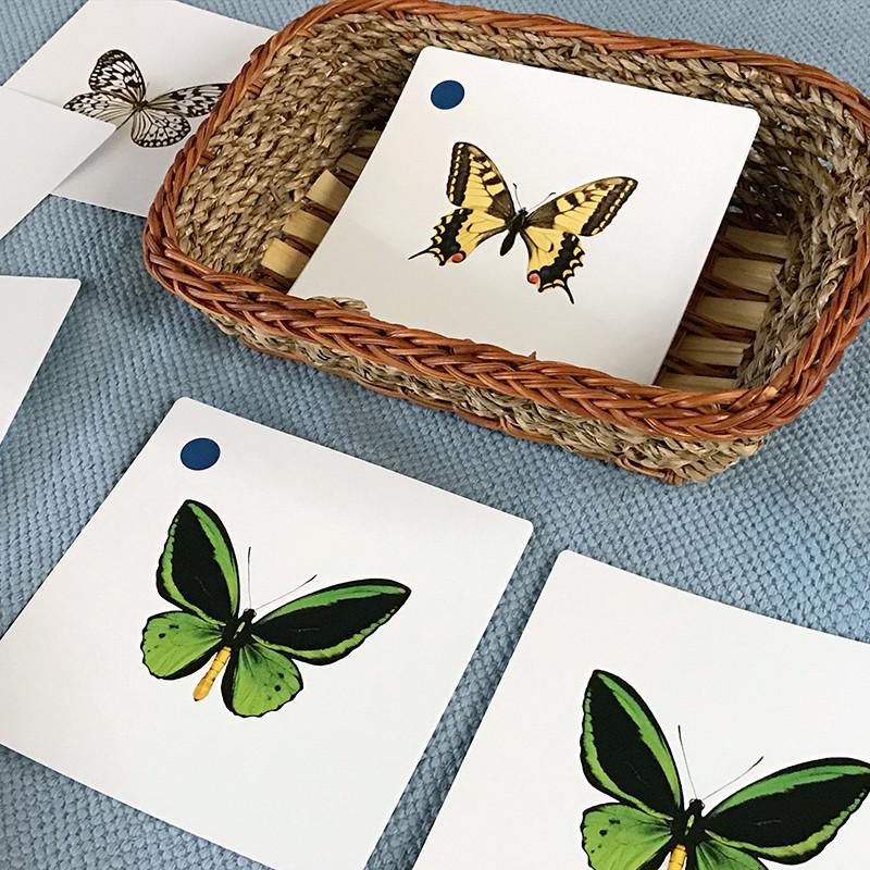 Butterflies Matching Cards (IT-0025)