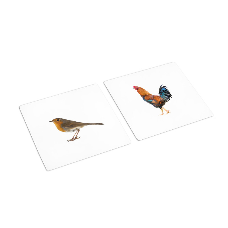 Butterfly - Bird Sorting Cards (IT-0070)