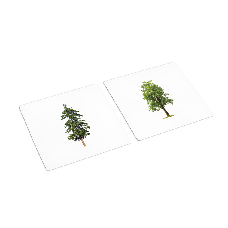Flowers - Trees Sorting Cards (IT-0071)