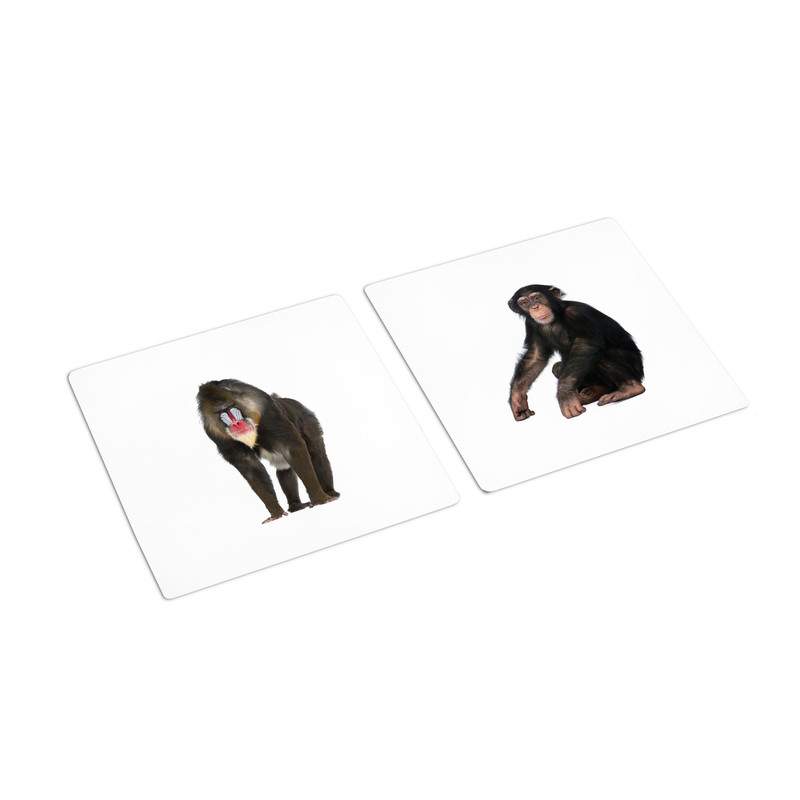 Frogs - Primates Sorting Cards (IT-0073)