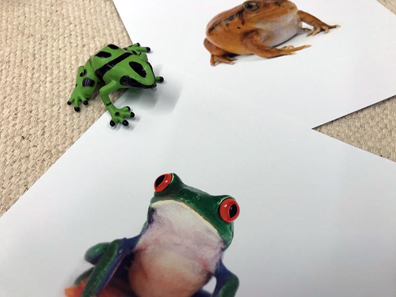 Frogs - Primates Sorting Cards