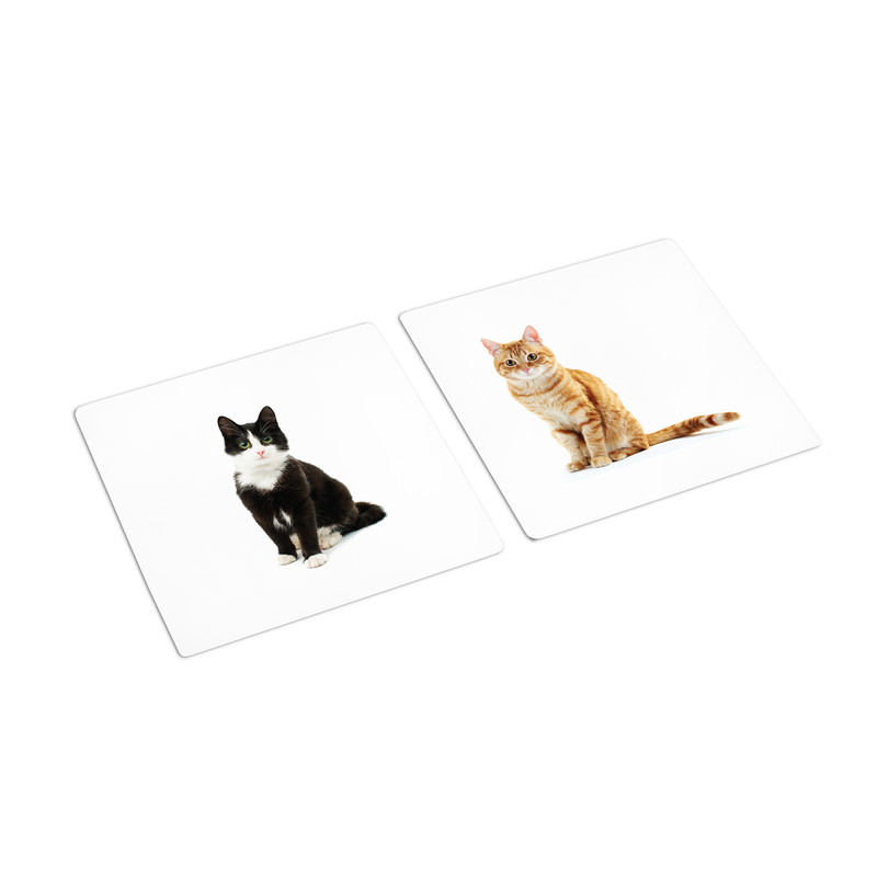 Same Animal Different Color Sorting Cards (IT-0087)