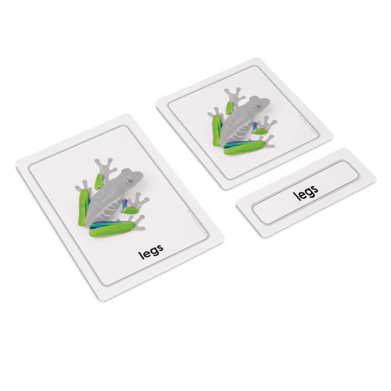 Parts of Vertebrates Bundle - Parts of a Frog