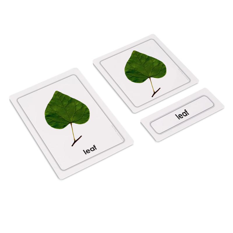 Parts of Plants Bundle - Parts of a Leaf