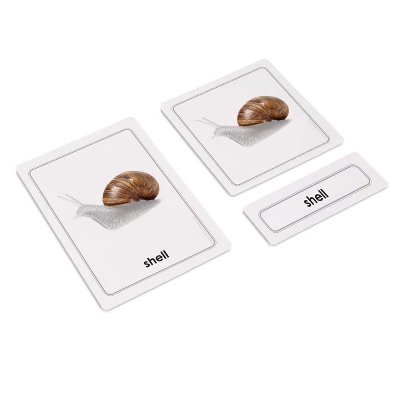 Parts of Invertebrates Bundle - Parts of a Snail