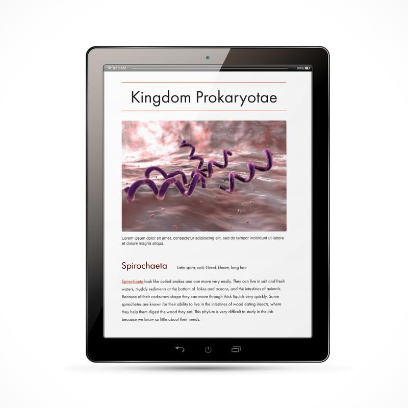 Prokaryota Kingdom Chart - Digital Edition