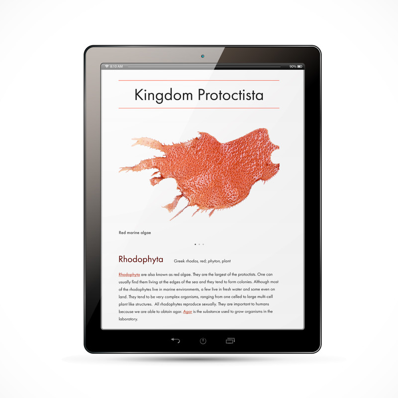 Protoctista Kingdom Chart - Digital Edition