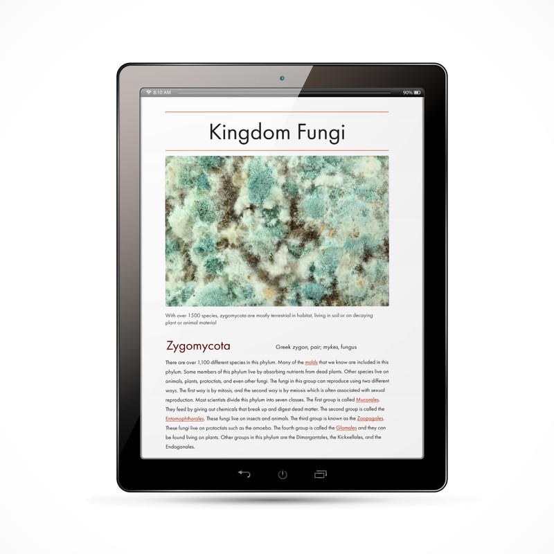 The Fungi Kingdom Chart - Digital Edition