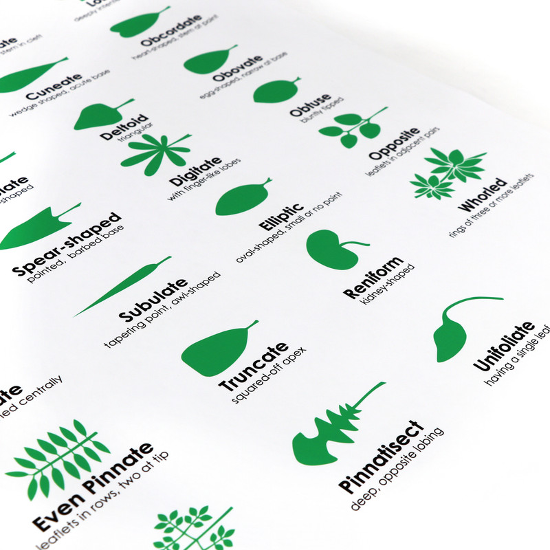 Leaf Morphology Chart