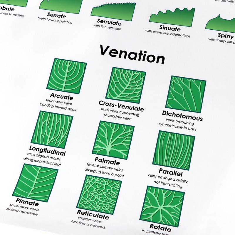 Leaf Morphology Chart