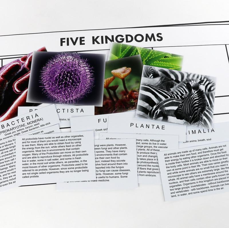 The Five Kingdom Chart
