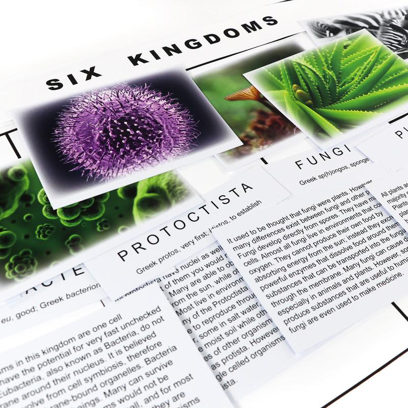 The Six Kingdom Chart