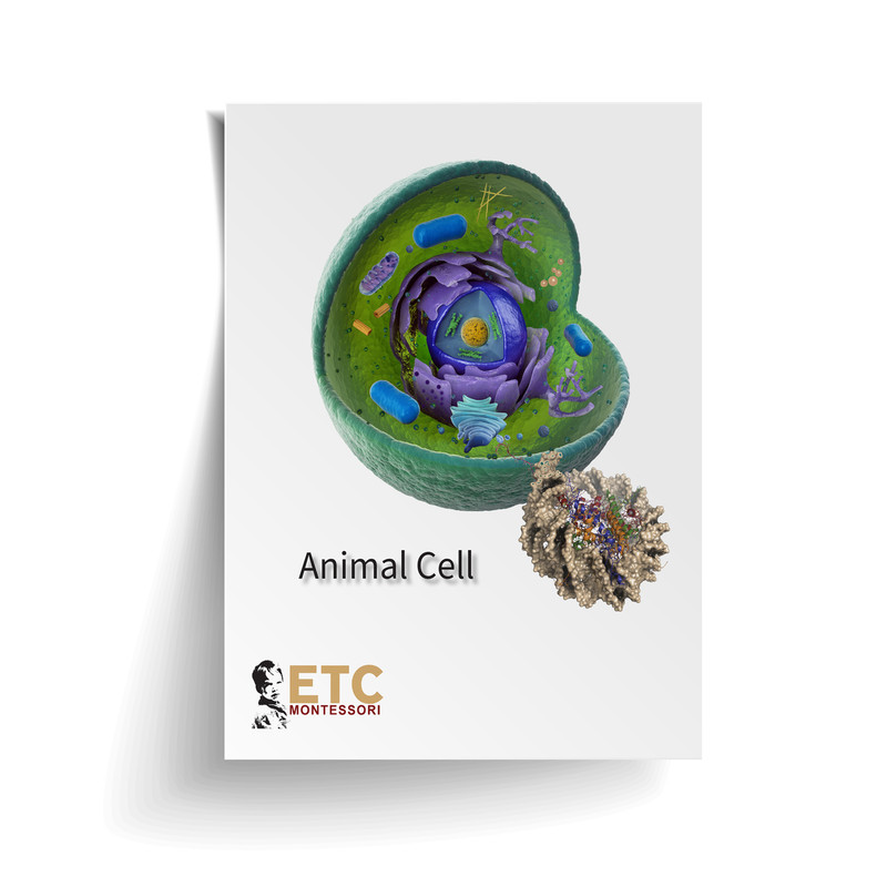 Animal Cell Nomenclature