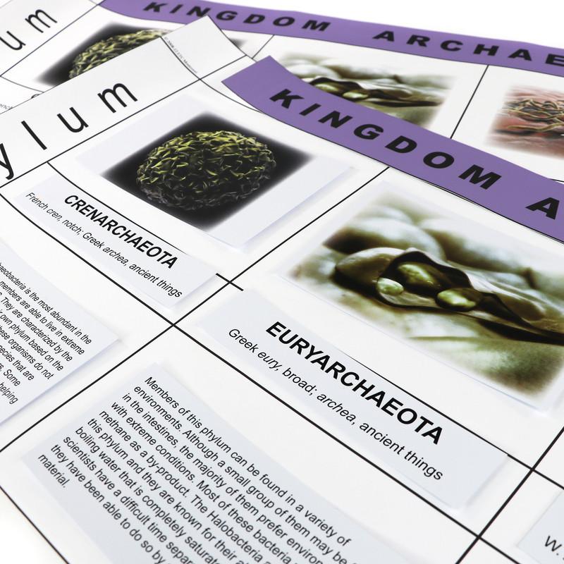 Archaeobacteria Kingdom Chart (ELC-4070)