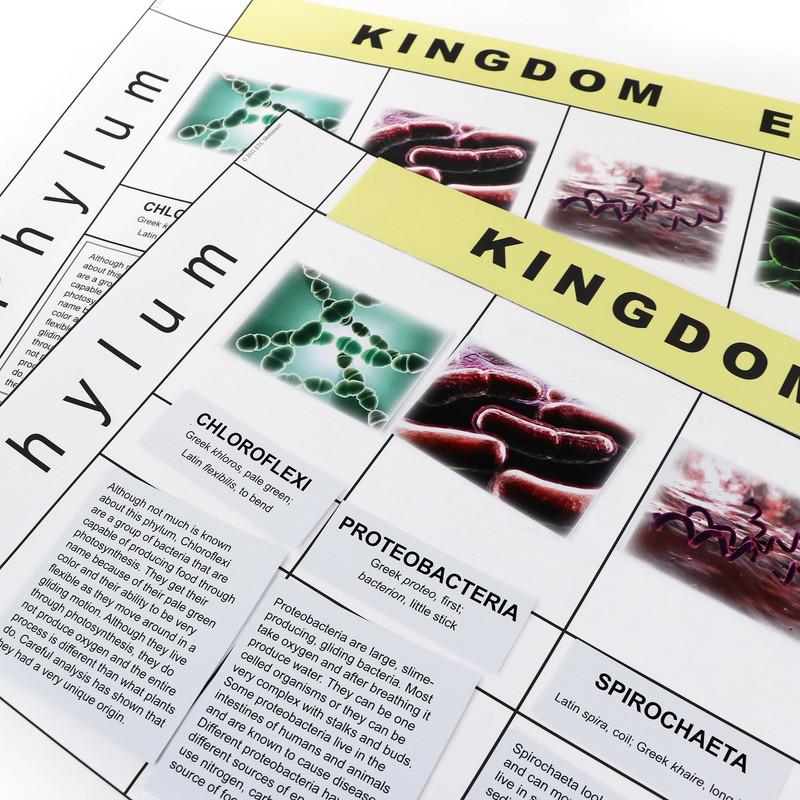 Eubacteria Kingdom Chart (ELC-4071)