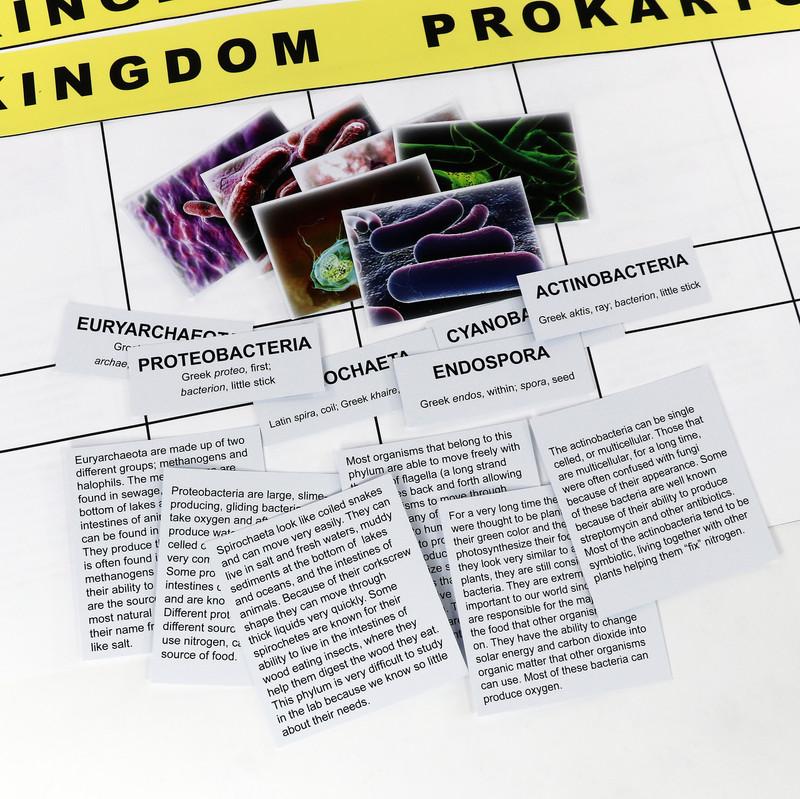 Prokaryota Kingdom Chart (ELC-4055)