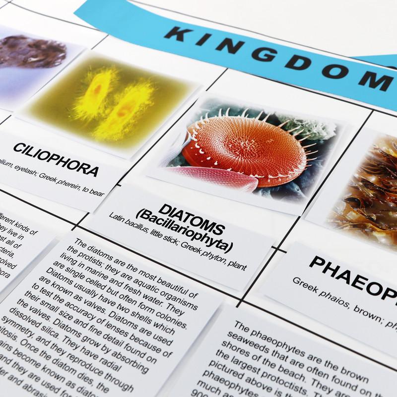 Protoctista Kingdom Chart (ELC-4056)