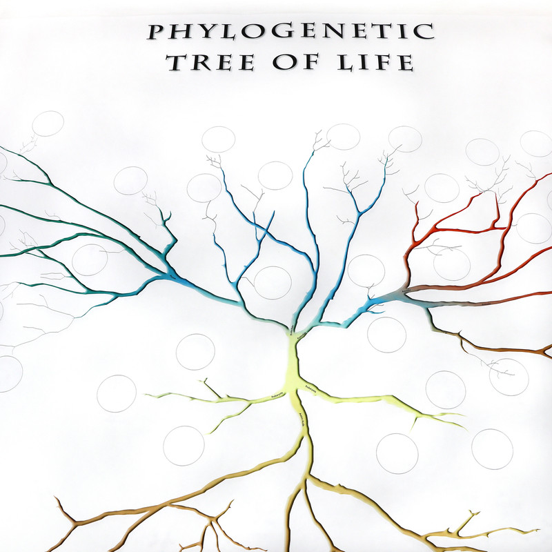 Phylogenetic Tree of Life (ELC-4042)