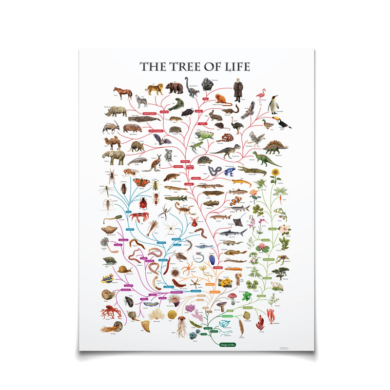 Tree of Life (ELC-4043)