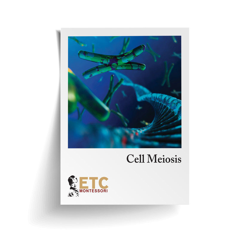 Cell Division - Meiosis (ELC-4012)