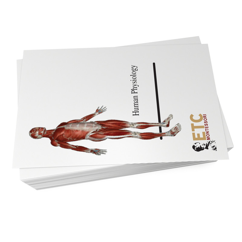 Human Anatomy Bundle