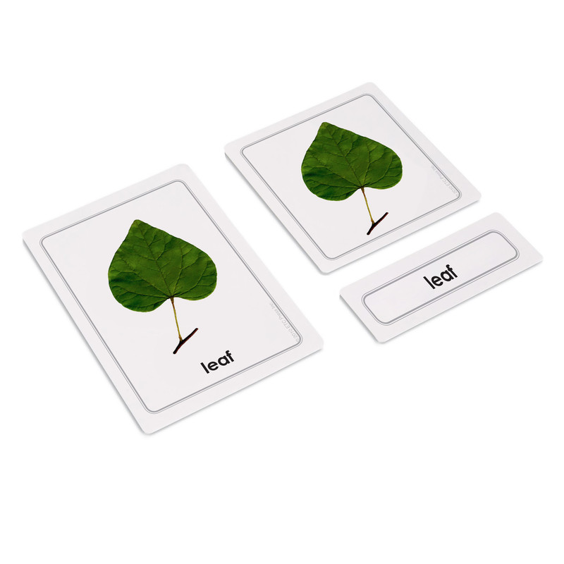 Parts of a Leaf 3 Part Cards