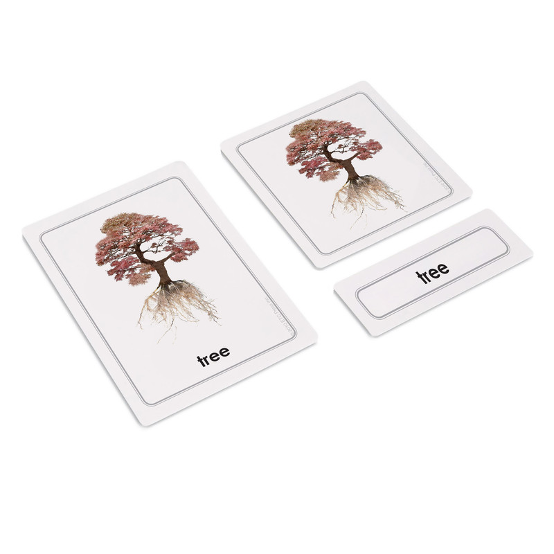 Parts of a Tree 3 Part Cards