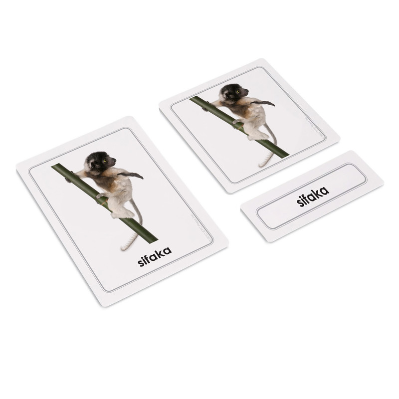 African Animals 3 Part Cards (EC-0428A)